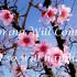 SpringWillComeSennFiles3.22.16